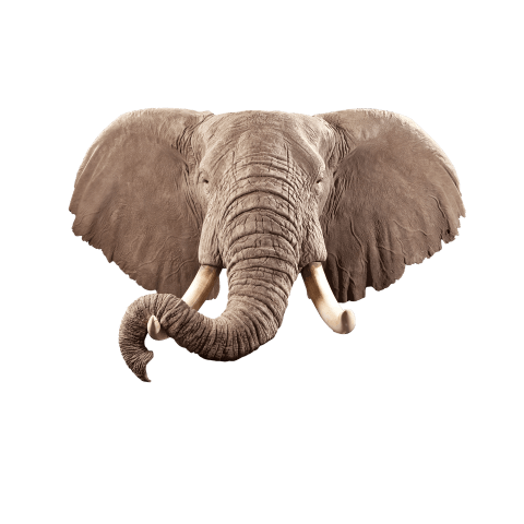 elephant shoulder mount
