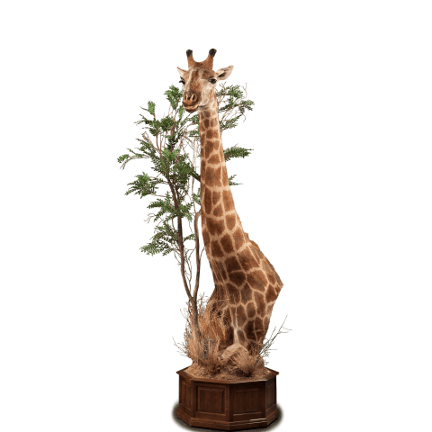 giraffe & tree pedestal mount