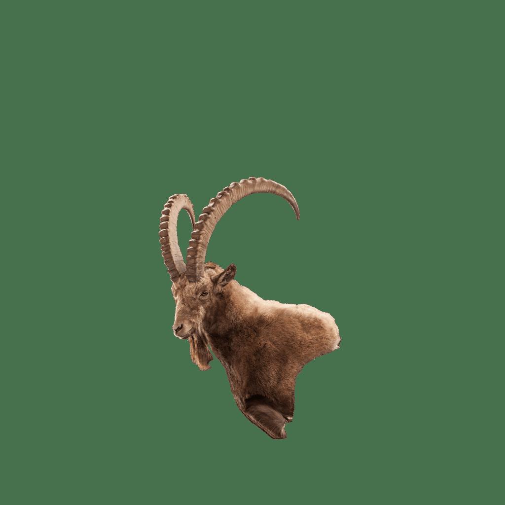 ibex wall mount