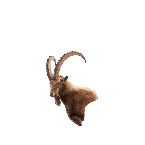 ibex wall mount