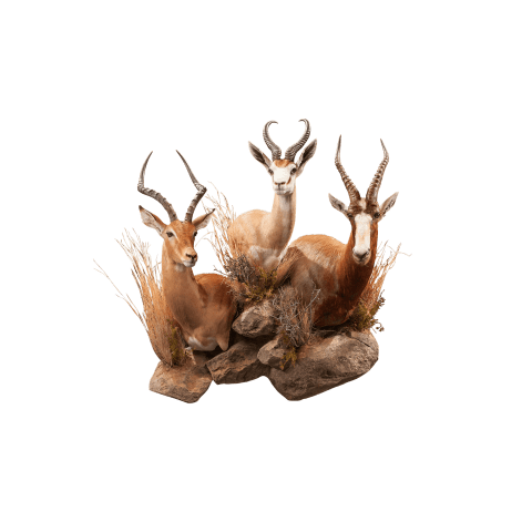 horned african animal pedestal taxidermy