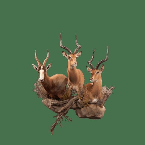 african animal taxidermy