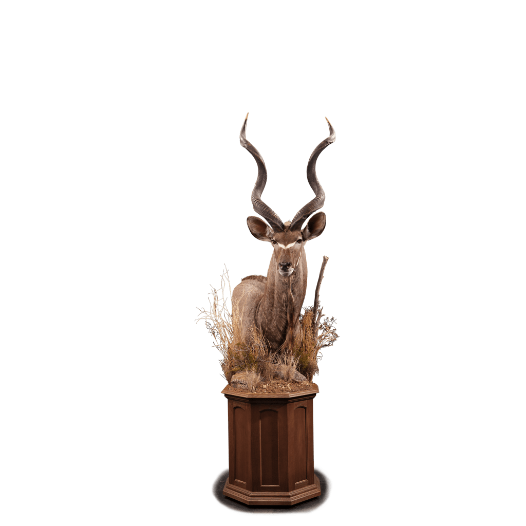 kudu shoulder pedestal mount