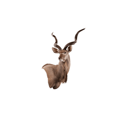 kudu wall mount