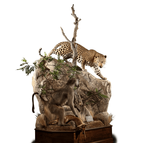 leopard and monkey taxidermy