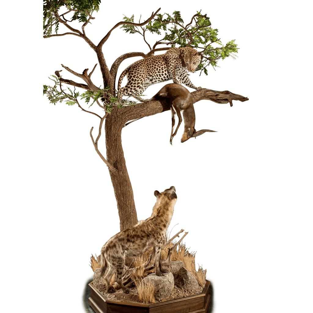 hyena and leopard taxidermy