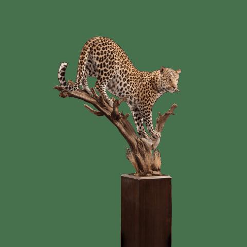 leopard pedestal