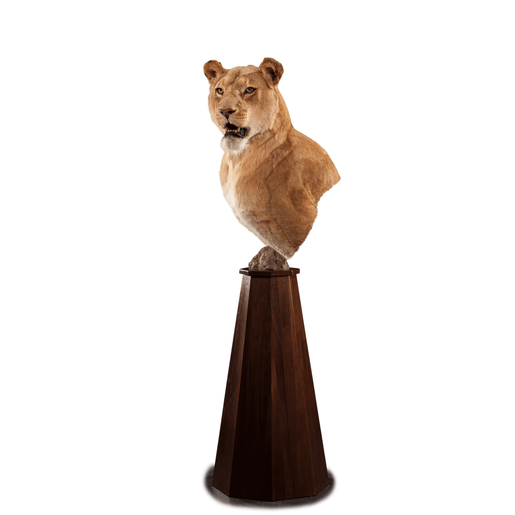 lion pedestal mount
