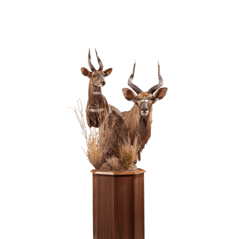 nyala and bushbuck pedestal mount