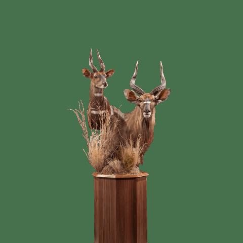 nyala and bushbuck pedestal mount