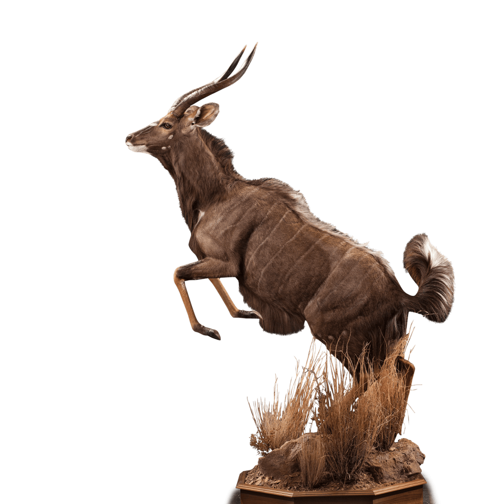 jumping nyala taxidermy