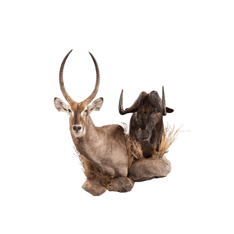 waterbuck and wildebeest pedestal mount