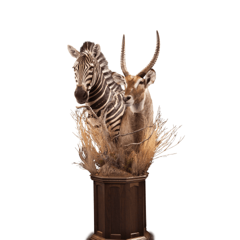 waterbuck and zebra pedestal mount