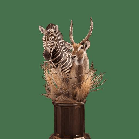 waterbuck and zebra pedestal mount