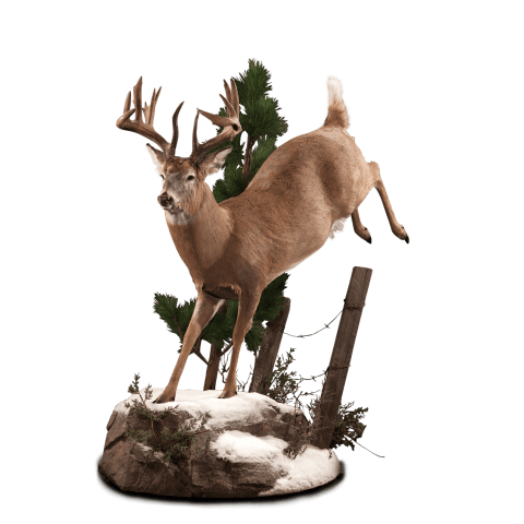 Jumping whitetail deer mount