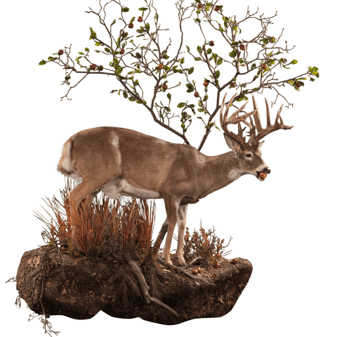 Whitetail deer at tree taxidermy moutn