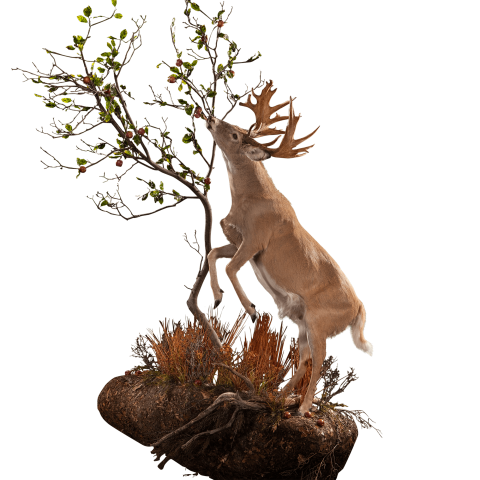 Whitetail deer at tree taxidermy