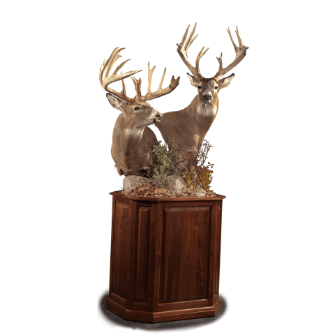 Two whitetail deer pedestal