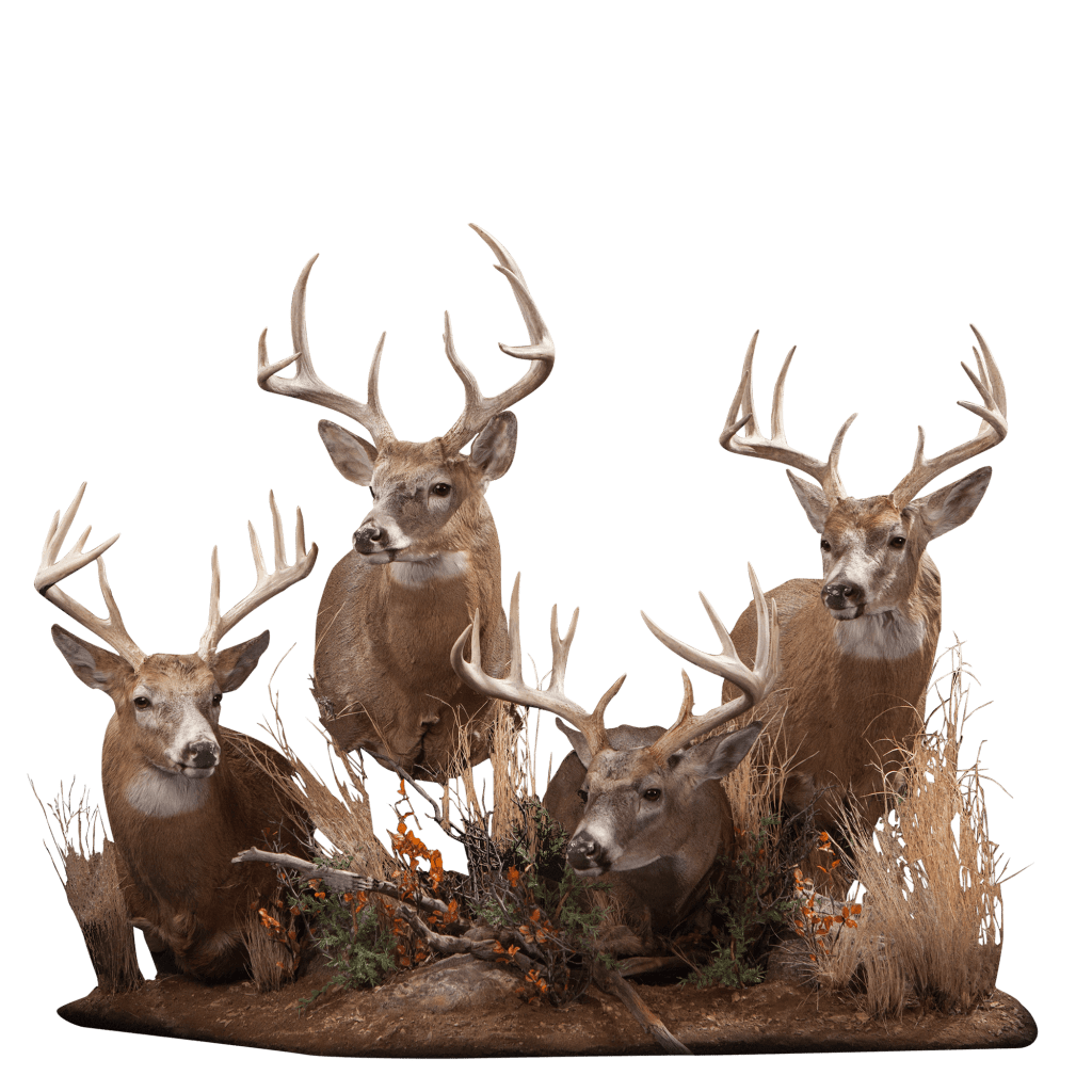 Three whitetail deer taxidermy pose