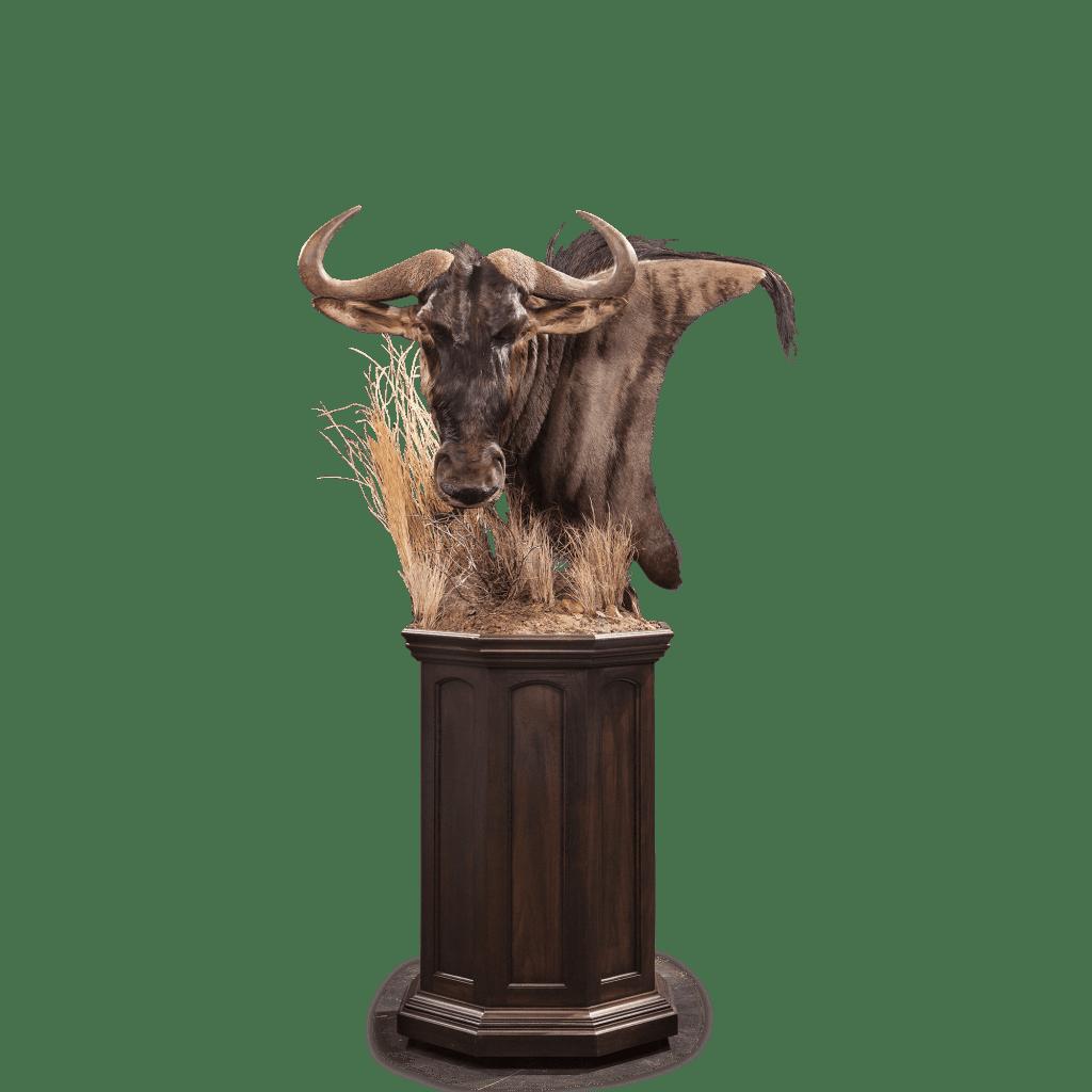wildebeest pedestal
