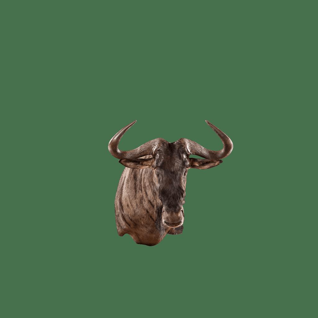 wildebeest mount