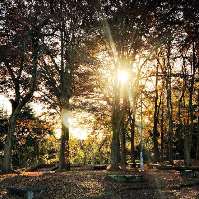 木漏れ日の光