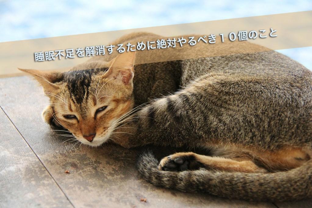 cat-597990_12801