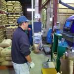 ライスセンターでの籾摺り作業