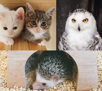 動物と触れ合える金沢のカフェ 3選