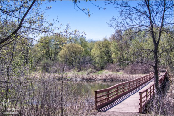 bridge going over a pond surrounded by budding trees | Spring 2019 | Coon Rapids Minnesota