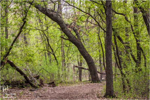 spring forest path | Spring 2019 | Coon Rapids Minnesota