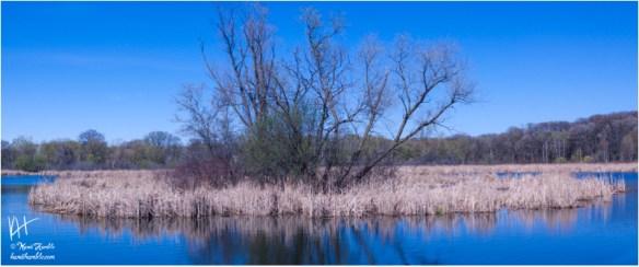 Springbrook Nature Center pond island | Spring 2019 | Coon Rapids Minnesota