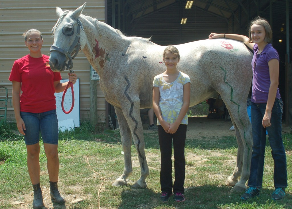 Jet makes an excellent canvas for our Equine Artwork party!