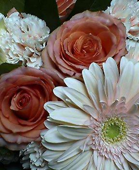 大輪のバラ(ペピータ)
