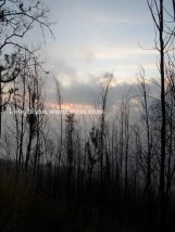 cemara terbakar pos 3 pendakian gunung lawu dari cetho