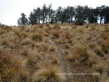 jalur menuju pos 5 bulak peperangan pendakian gunung lawu dari cetho
