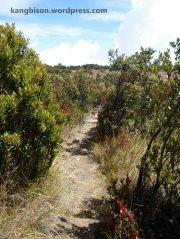 jalur sabana dan tumbuhan ilalang pendakian gunung lawu dari cetho