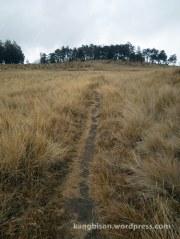 jalur sabana menuju pos 6 pendakian pendakian gunung lawu dari cetho