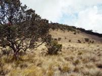 pendakian gunung lawu dari candi cetho