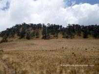sabana yang luas pendakian gunung lawu dari cetho