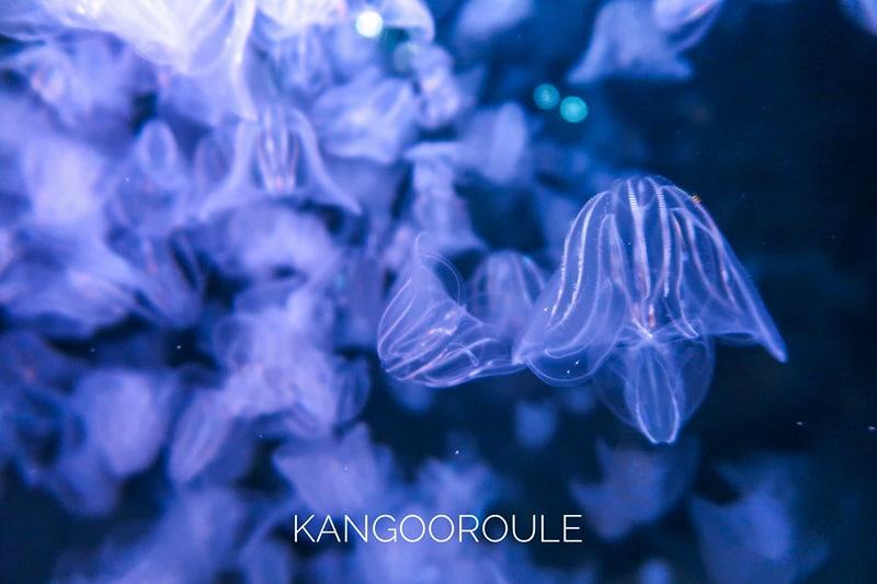 [Visite] L'Aquarium de La Rochelle, entre esthétique et pédagogie