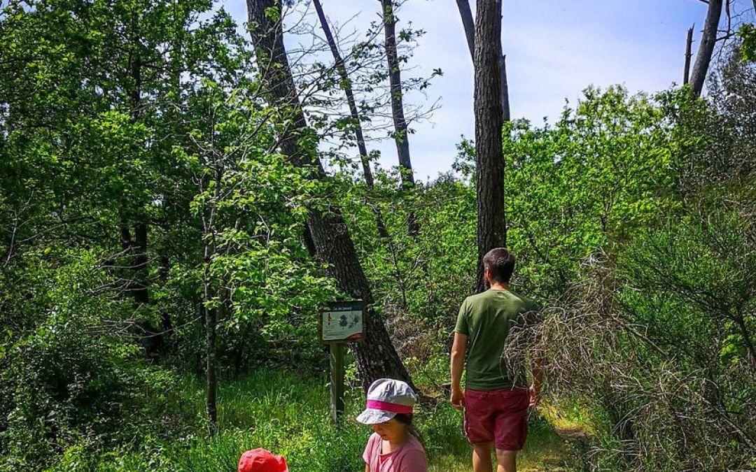 Envie d'une promenade sous le signe de la botanique ? Bienvenue à La Chapelle Hermier (Vendée – 85)