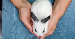 Kaninchen impfen