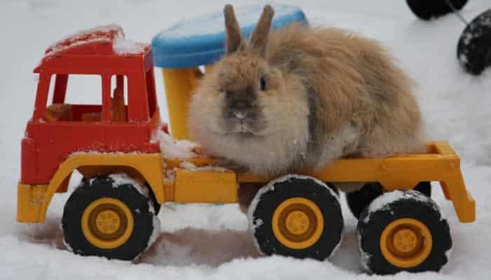 Kaninchenstall isolieren