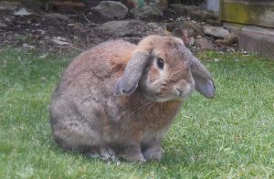 Kaninchenstall Für Draußen Selber Bauen Kaninchenstallkaufenorg