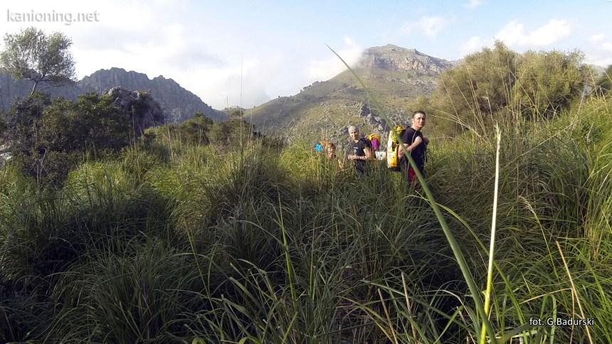 Ścieżka w trawie