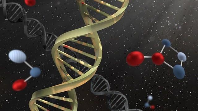 HSPは遺伝するか?HSCについても
