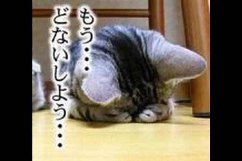 猫(瑞鳳天祥様)