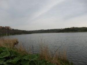 清掃後の春採湖