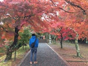 滋賀県キャンピングカーで琵琶湖一周紅葉狩り 名所鶏足寺